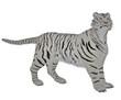White tiger in alert