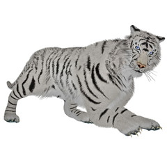 White tiger hunting
