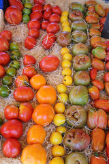 Tomatoes in various colors and shapes