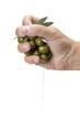 Puñado de acitunas chorreando aceite al prensarlas