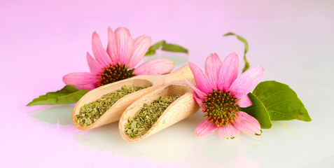 Purple echinacea flowers and dried herbs on pink background