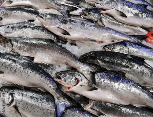 King Salmon on ice
