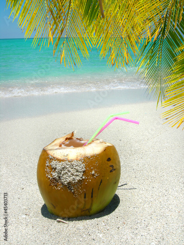 Caribbean beach coconut and palm