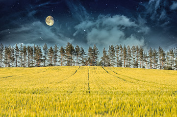Mysterious Landscape – Yellow Field, Moon & Dark Night Sky