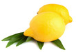 two yellow ripe lemons on a white background
