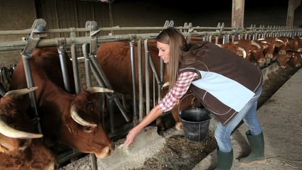 Woman feeding cows in barn