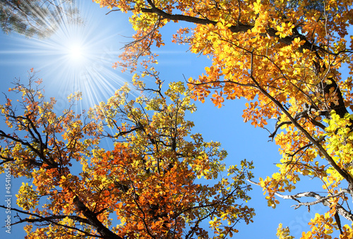 Autumn trees and sun
