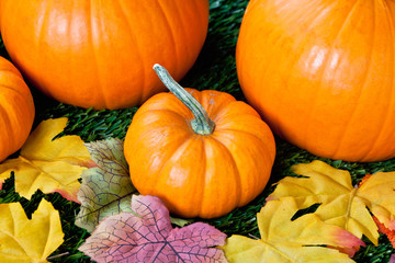 view of halloween pumpkins
