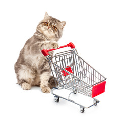 Cat with a cart