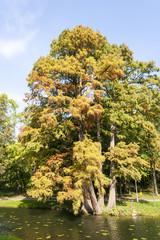 Leafy tree by lake