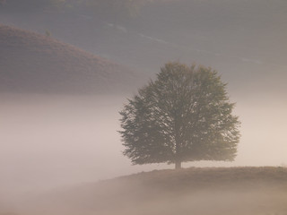 Landscape tree silhouette on hill