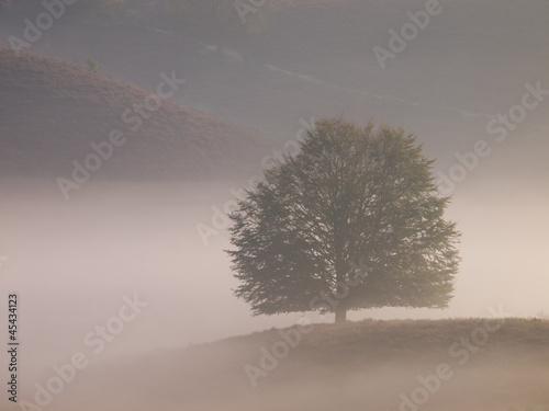 Landscape tree silhouette on hill