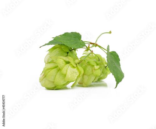 Green hops  plant, hopcones isolated on white background - 45434777