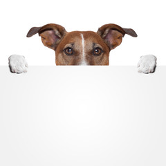 placeholder banner dog