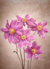 Anemone flowers © iLight photo