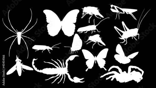 插图收集昆虫春天漫画白色翅膀背景装饰象徵载体轻便铁路蝴蝶站黑色