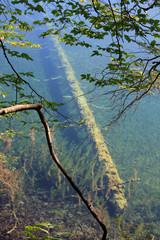 tronco sommerso nel lago - Plitvice