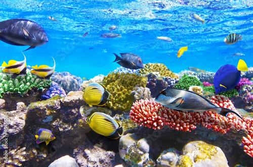 Koral i ryba w Czerwonym morzu. Egipt