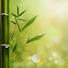 Milieux naturels zen avec des feuilles de bambou