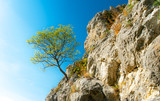 Fototapety Lonely tree hanging from rocks in the mountains