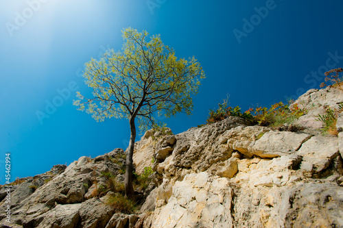 Lonely tree hanging from rocks in the mountains