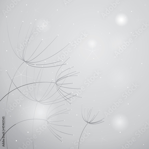 Flowers Anise / Soft black-and-white floral background