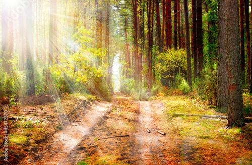 Fototapety, obrazy : Autumn Forest