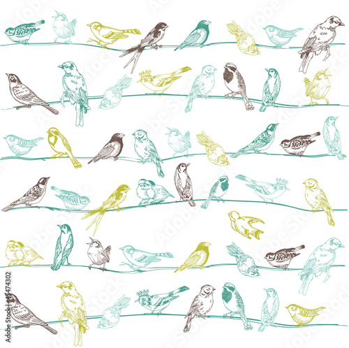 Birds Seamless Background - for design and scrapbook - in vector - 45474302