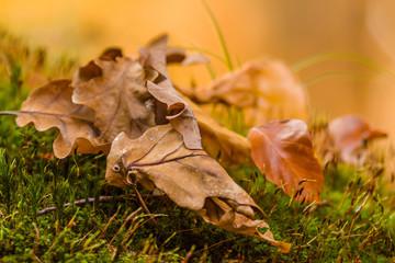 Herbstblätter im Moos