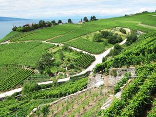 Famouse vineyards in Lavaux region against Geneva lake. Switzerl