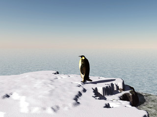 penguin on snow