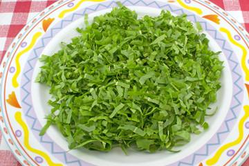 Ceriolo verde o Cicorino
