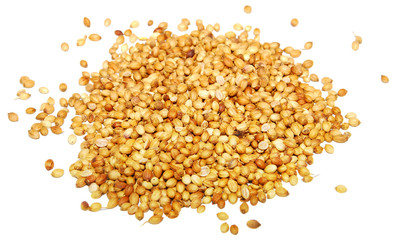 Whole coriander seeds, isolated on a white background
