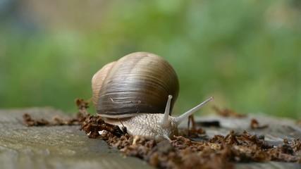 timelapse snail