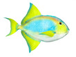 Tropical reef fish.