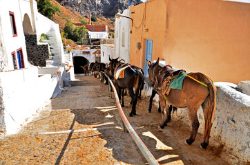 Donkey waiting for passengers to bring them to the upper town