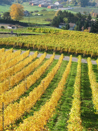 Vineyards in Montreux, Switzerland