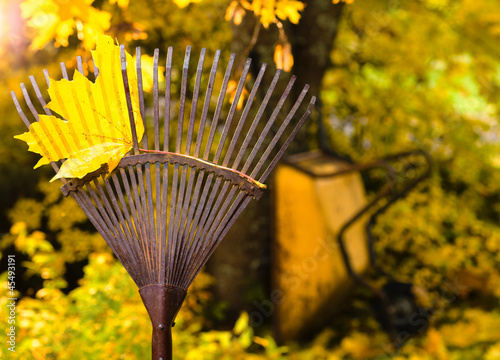 Rake and leaf
