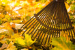 Rake and leafs
