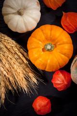 Pumpkins for Thanksgiving