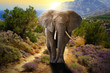 Elephant walking on the road at sunset