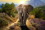 Fototapety Elephant walking on the road at sunset
