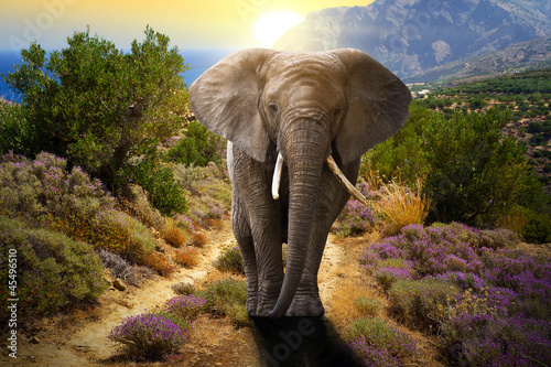 Canvas Zuid Afrika Elephant walking on the road at sunset
