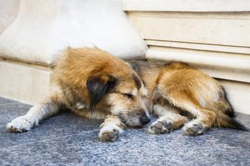 Sleeping stray dog