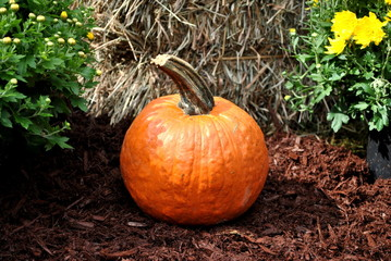 Alone Pumpkin