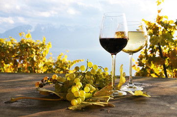 Pair of wineglasses and bunch of grapes. Lavaux region, Switzer