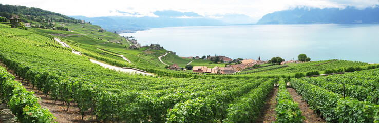 Famouse vineyards in Lavaux region against Geneva lake. Switzerl