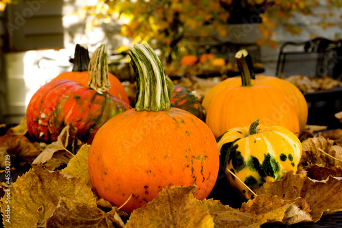 Table Top of Pumpkins and Squash