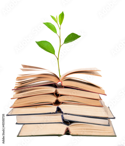 Green sprout growing from open books