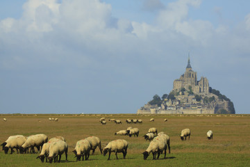 Sheep and Mont Saint Michel